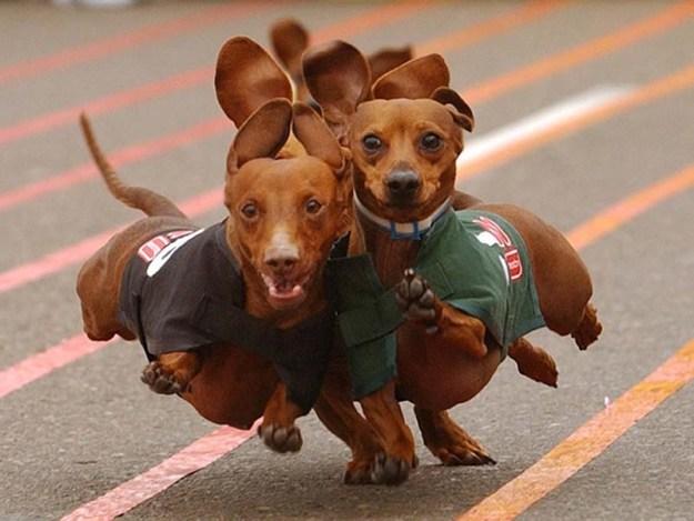 Goiânia recebe cães atletas de todo Brasil