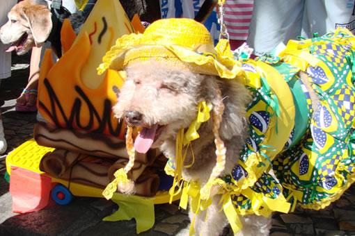 Sábado (16) tem festa junina para cachorros