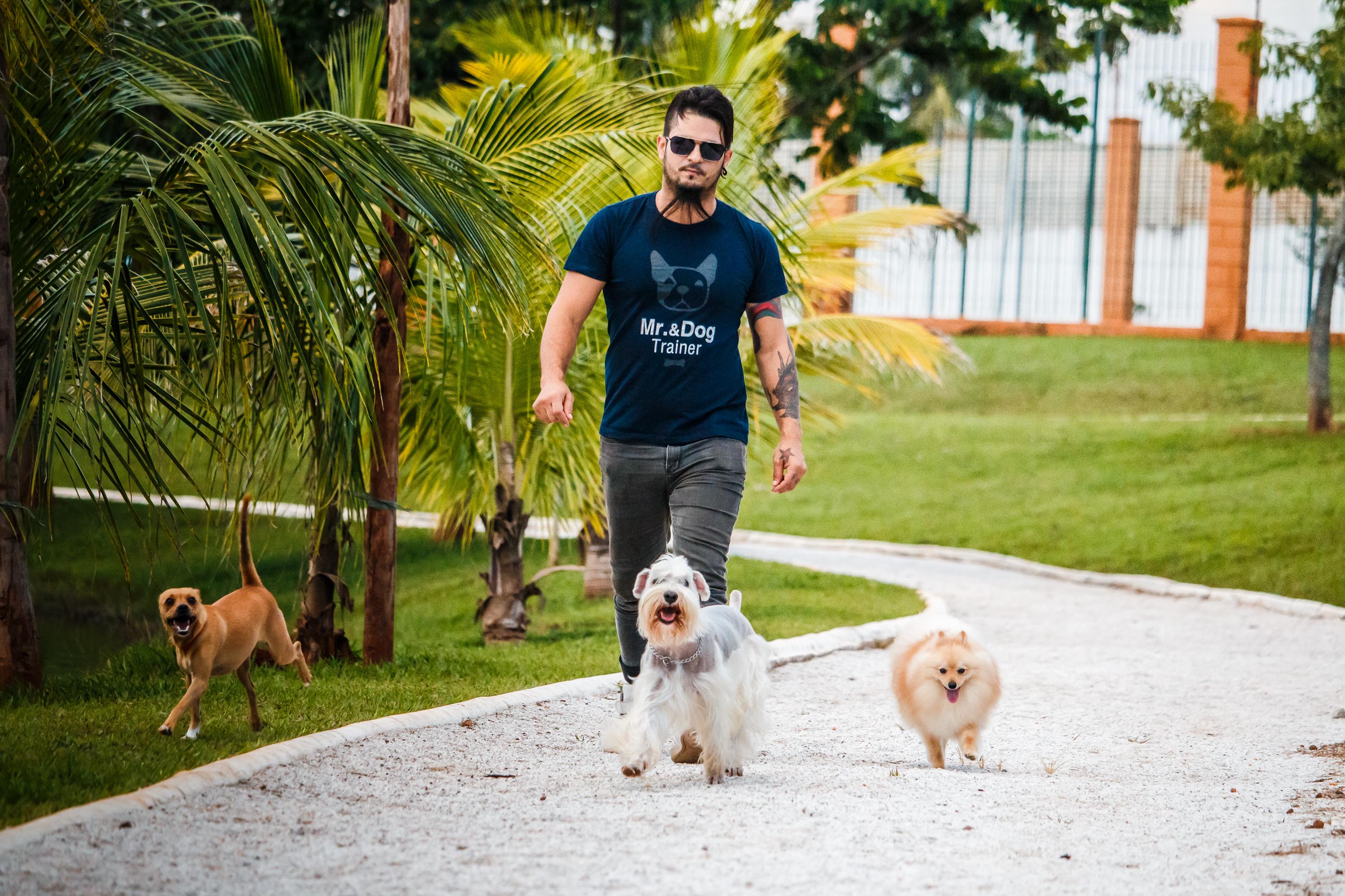 Dogs Day dará dicas de como adestrar cães