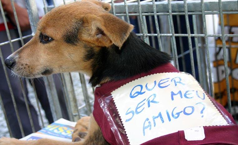 Loja na Nova Suíça recebe feira de adoção de pets, domingo (19)