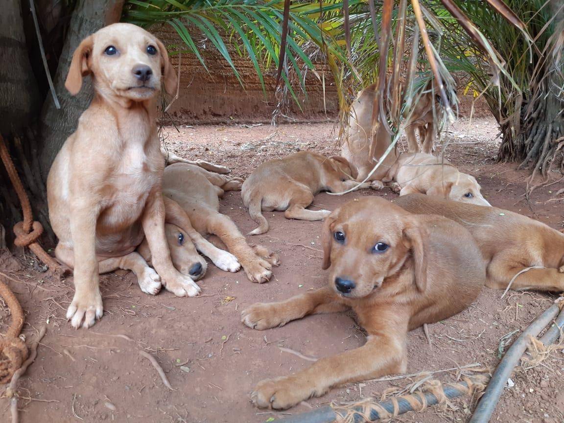 Grupo Miau Auau promove evento de adoção de animais