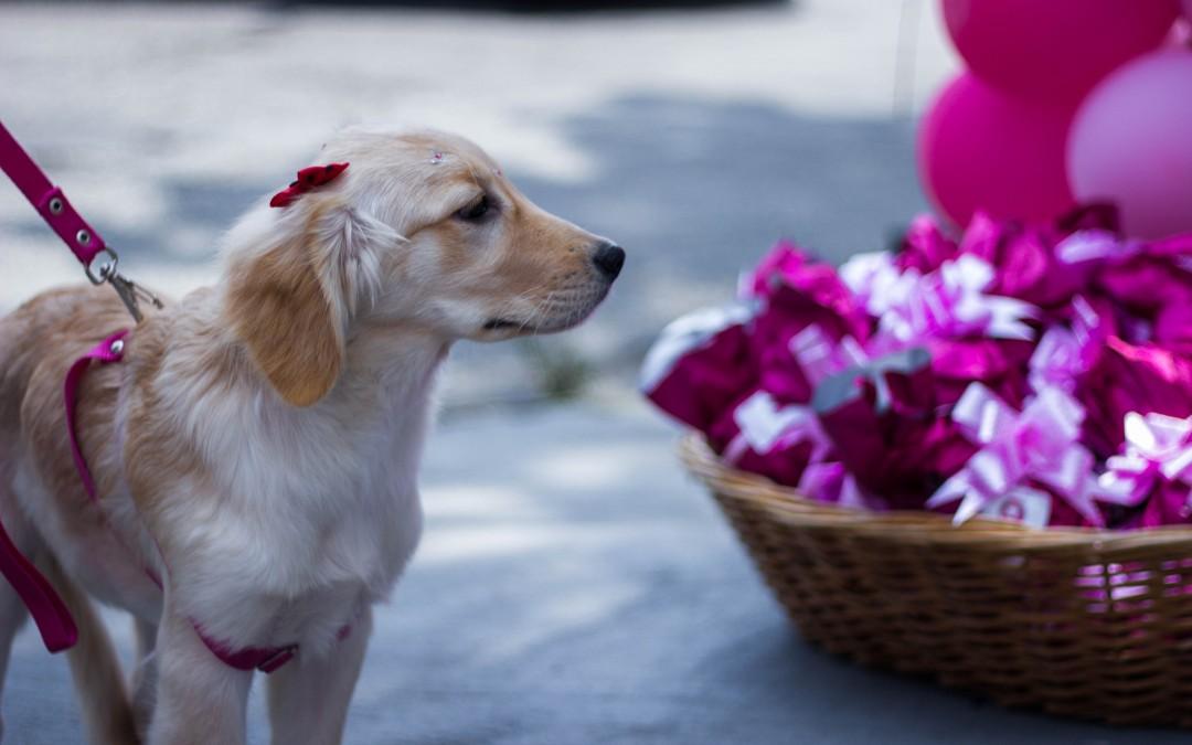 Prevenção contra câncer de mama também vale para animais