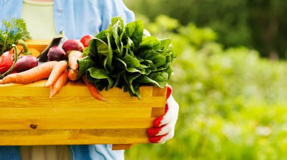 Projeto do Bougainville estimula  alimentação orgânica e vida saudável