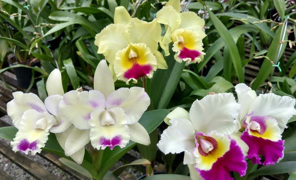 Shopping de Goiânia recebe nova edição do Villa Saudável com exposição de orquídeas
