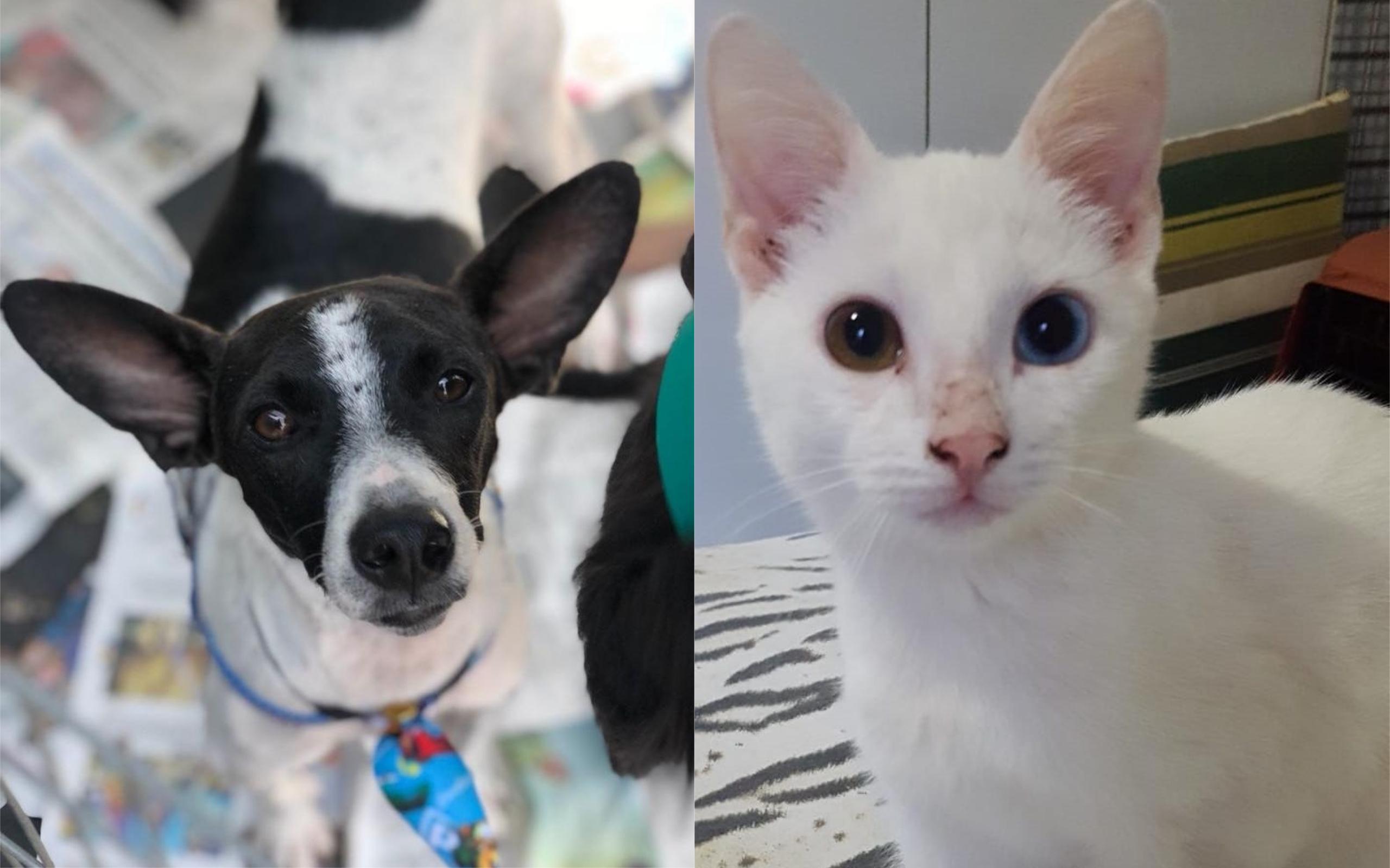 Shopping de Goiânia promove evento de adoção de cães e gatos