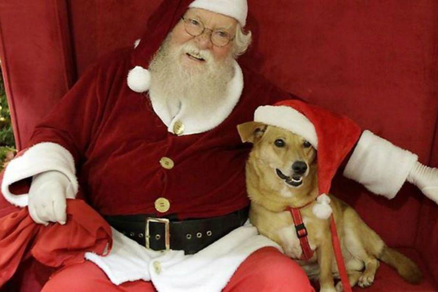 Shopping de Goiânia terá decoração de Natal especial para receber crianças e pets