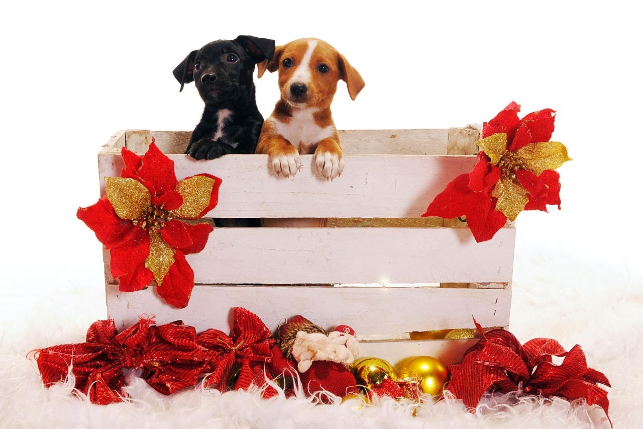 Pet Shop em Goiânia recebe evento de adoção de animais