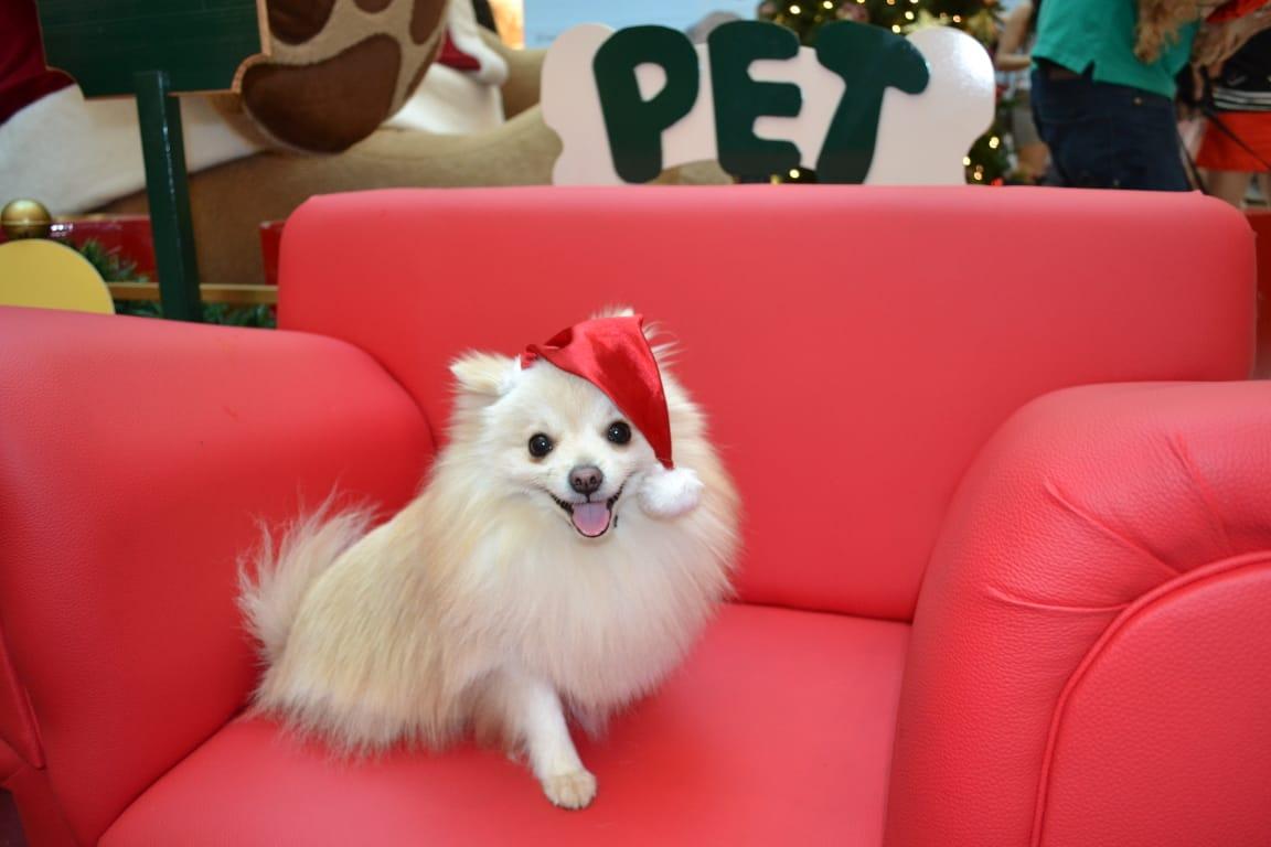 Animais podem fazer foto com Papai Noel em shopping de Goiânia