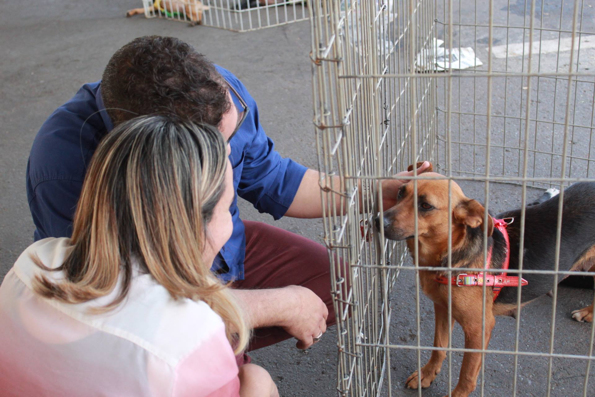 Shopping de Goiânia recebe evento de adoção de cães e gatos