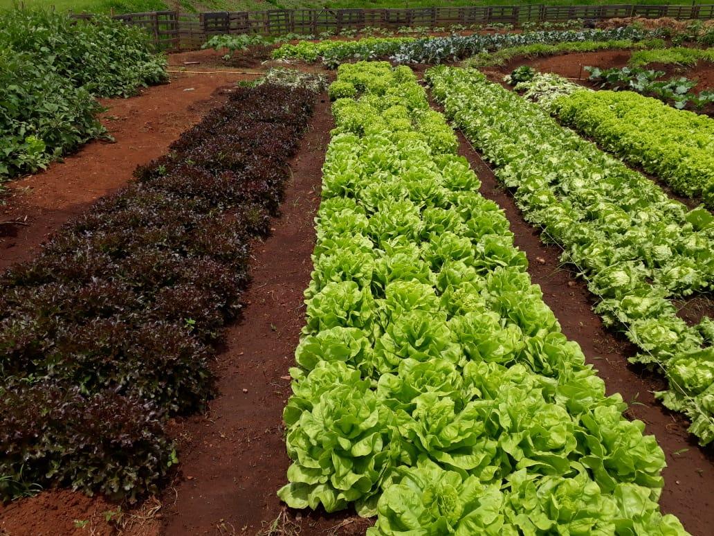 Prefeitura de Goiânia oferece curso sobre produção de hortas comunitárias