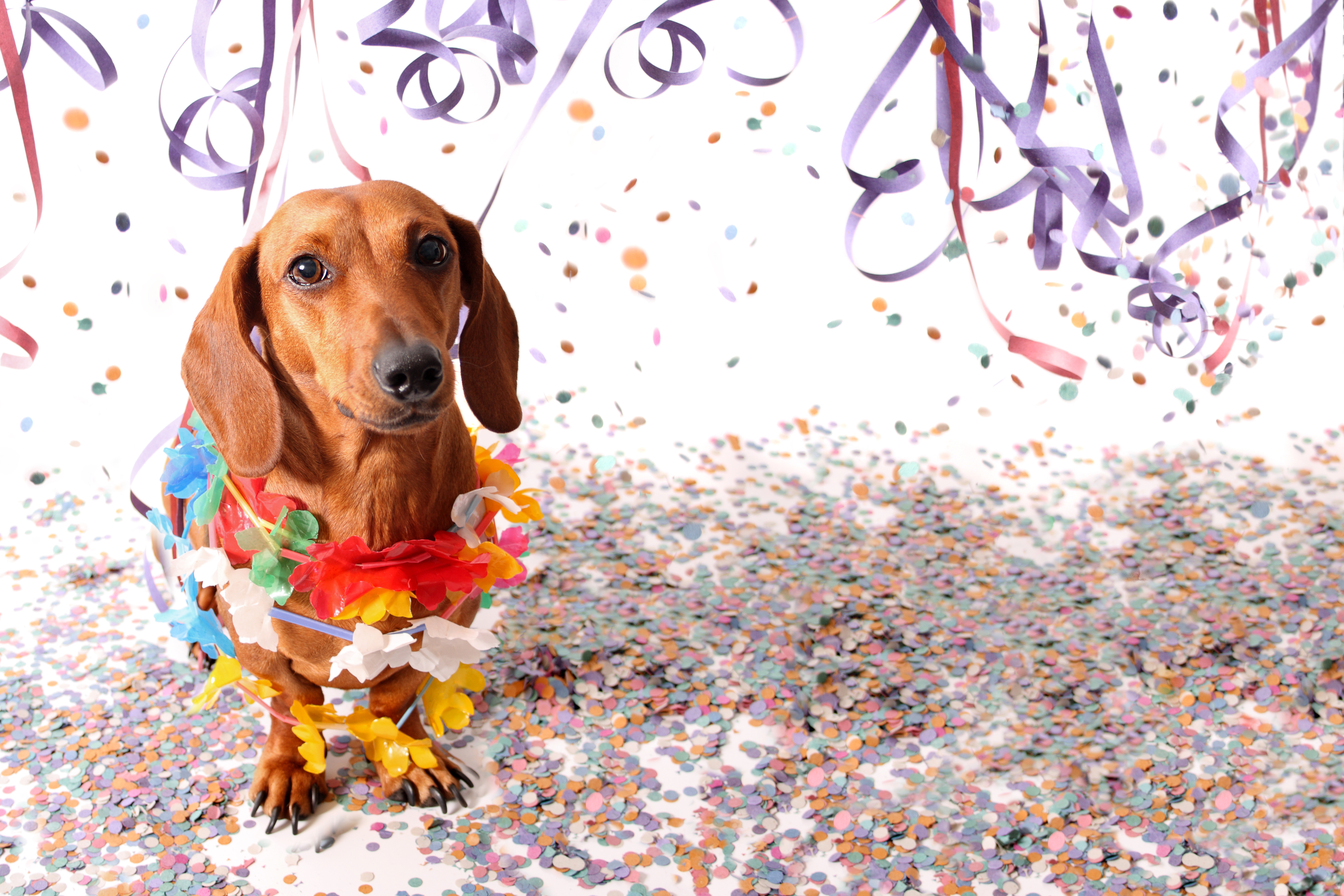 Goiânia terá o primeiro Carnaval para pets