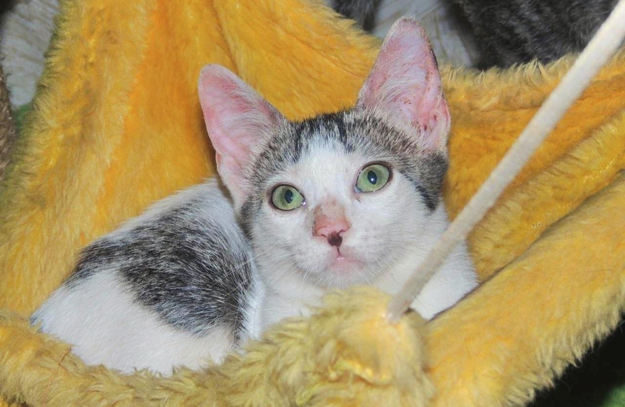 Pet Shop recebe evento de adoção exclusivo com gatos