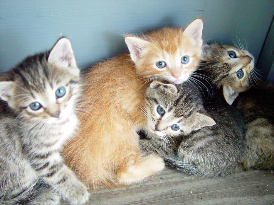 Show no Lowbrow arrecada doações para protetora de animais