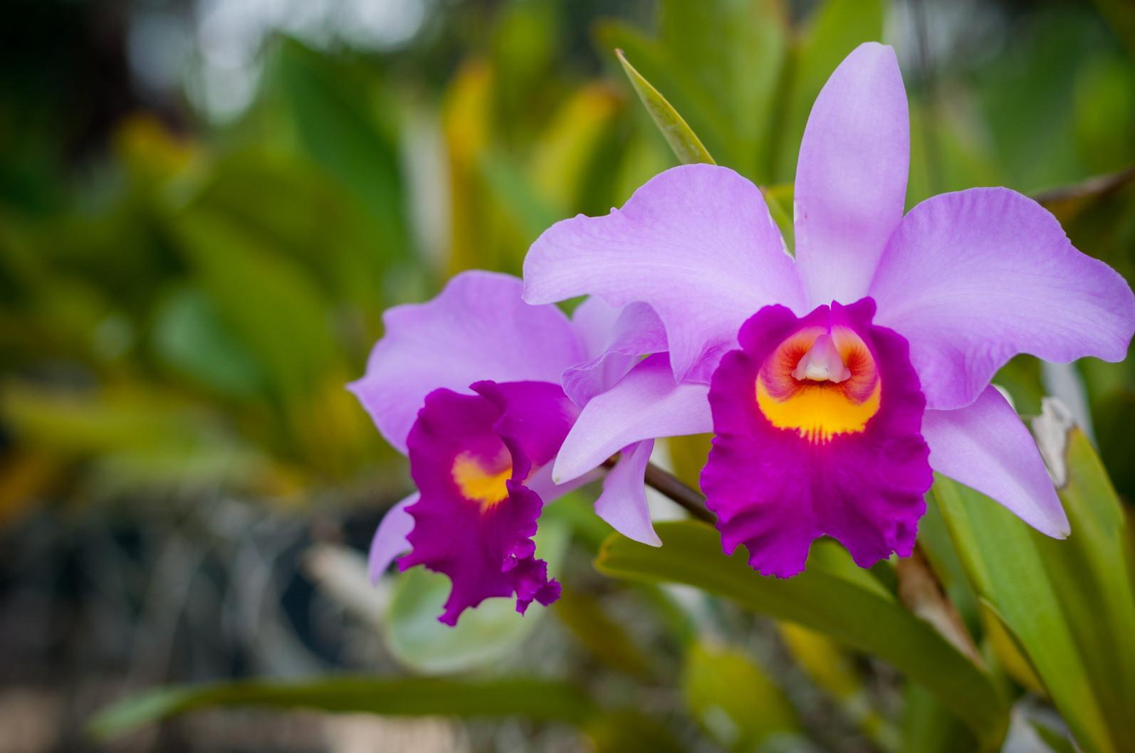 Shopping Cerrado recebe exposição de orquídeas